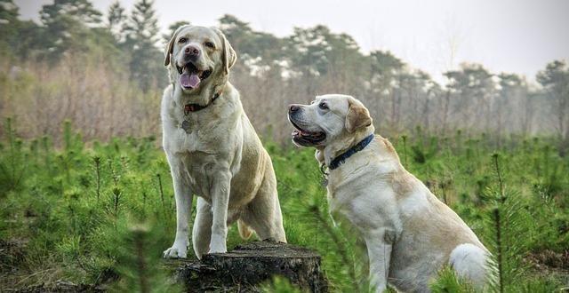 בחירת מזון לכלב