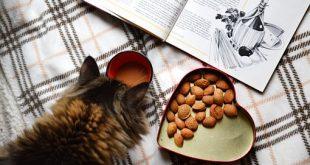 בחירת אוכל לחתולים